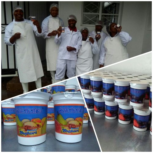 NUL gears for  industrial-scale  yoghurt production