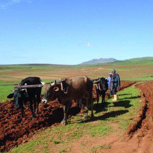 Get Basotho back into agriculture