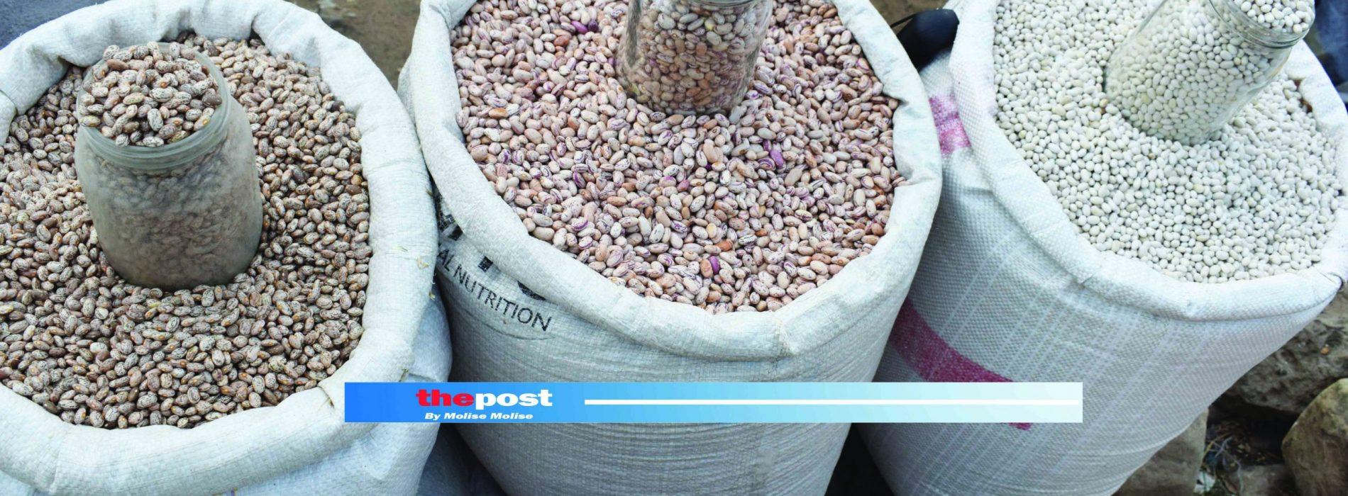 Bean deal for Lesotho farmers