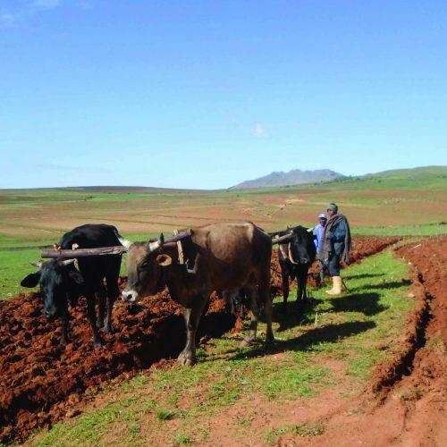 Minister sets aside M587m for farming