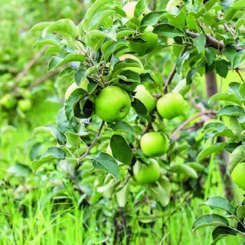 Vegetable import ban not enough